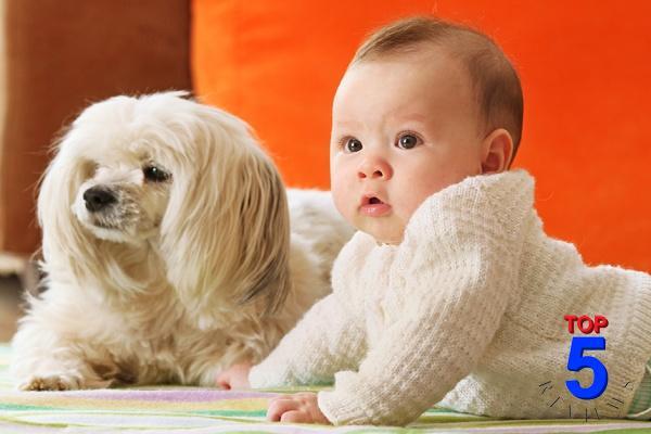 Bệnh sán chó có lây, có nguy hiểm không